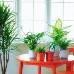 专家解密 室内摆放植物的风水学识