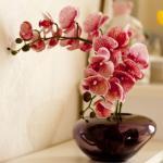 屋里摆放假花有说法吗 屋里摆放花有什么讲究