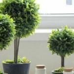 办公室风水:办公室风水植物怎么选?