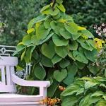 庭院植物与风水之间的关系 植物怎么影响庭院风水