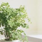 植物风水有哪些?家中摆放风水植物的注意事项