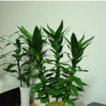 家居植物摆放风水 植物摆放位置风水讲究