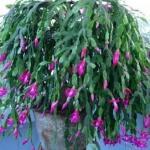 室内花卉怎么种风水更好?种养花卉的风水讲究