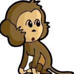 属猴人命相