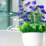 室内花卉风水禁忌有哪些?什么样的花不能养在室内?