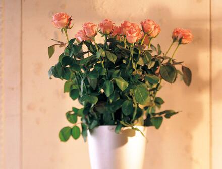 卧室摆放花朵要注意哪些问题?室内花卉风水讲究