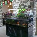 在家中养鱼旺财需要注意什么风水事项
