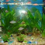 办公室内应该如何摆放鱼缸?养殖风水鱼?