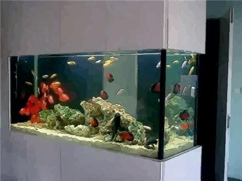 新房内摆放风水鱼缸要了解哪些原则