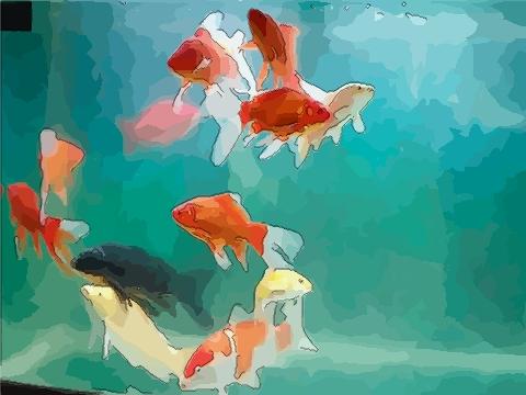 家中养鱼能招财 如何养鱼才能招财