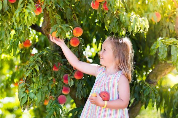 梦见偷别人树上的桃子