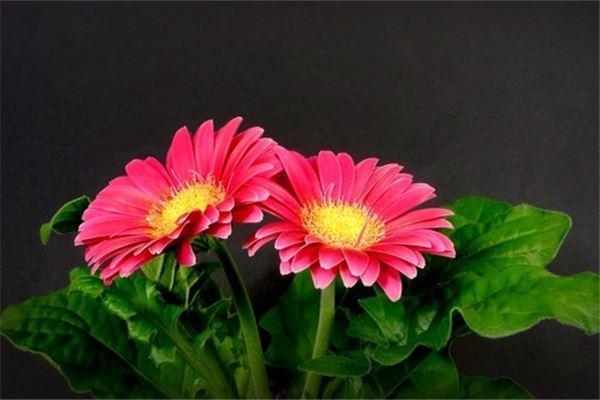 已婚女人梦见漂亮的花