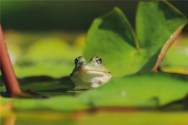 梦见好多青蛙