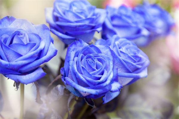 梦见漂亮的花