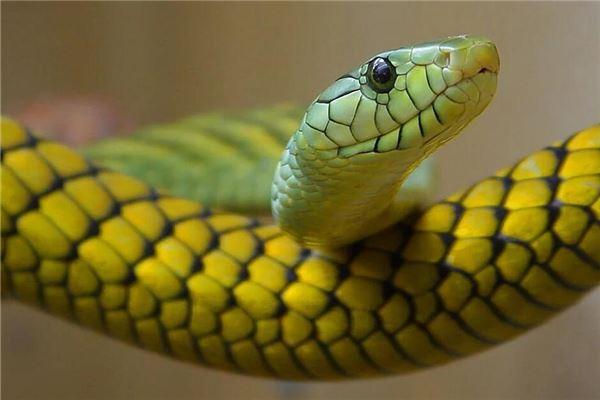 男人梦见蛇爬上身