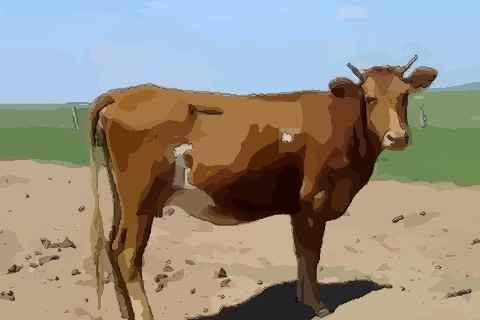属牛起名字适合用的字 属牛宝宝起名字大全