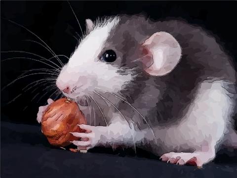 属鼠宝宝乳名带含义的