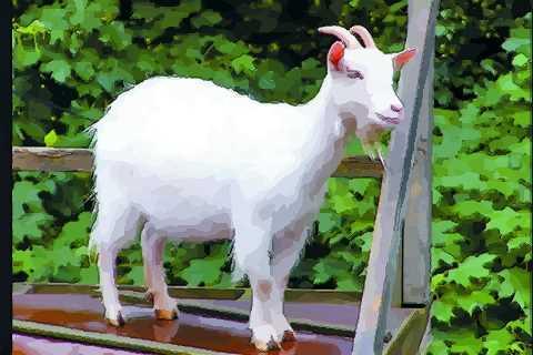 属羊人十二月份出生不同命运哪个月最好