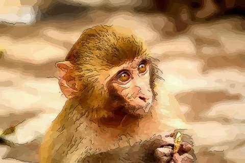 带你看四月出生的属猴人命运好吗