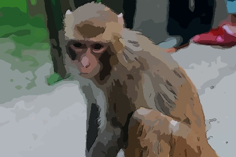 十二生肖中属猴的人命运如何几点最好
