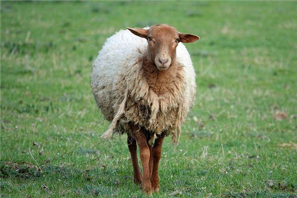 生肖羊在2021年不好吗