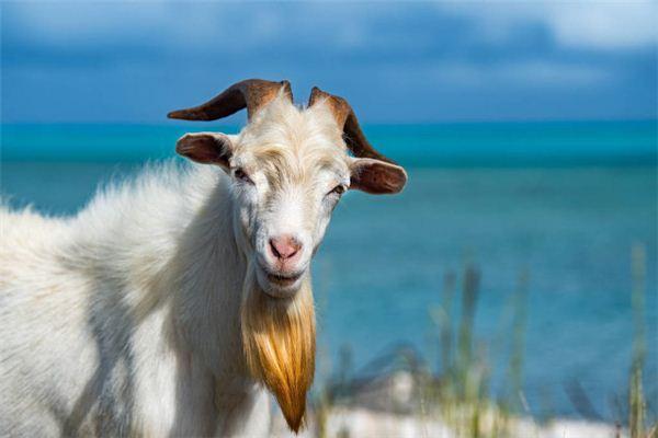 生肖羊出生年份速配的生肖