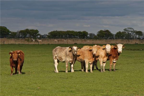 属牛的是哪一年的